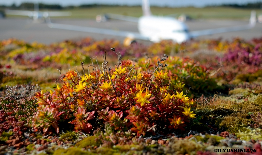 "We have ""green roofs"" Veg Tech, on some of our buildings at the Airport."